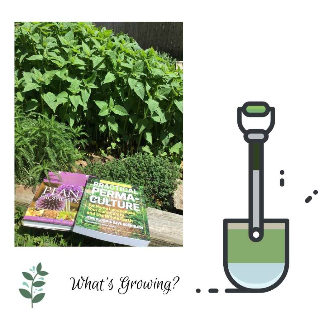 Photo of herbs growing in the garden and two books about gardening. One book is about Permaculture and the other is on plant propogation.
